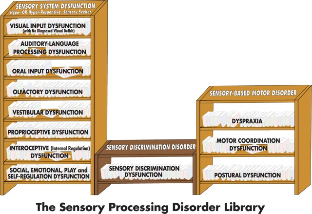 The Basics: An Overview of the Different  Types of Sensory Processing Disorders